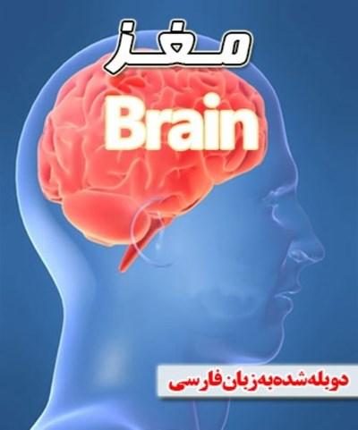 دانلود مستند مغز