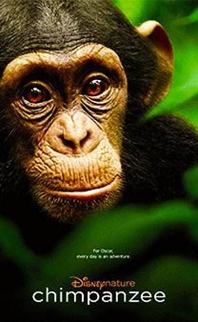 شامپانزه